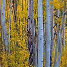 Beautiful Fall Forest by Bo Insogna