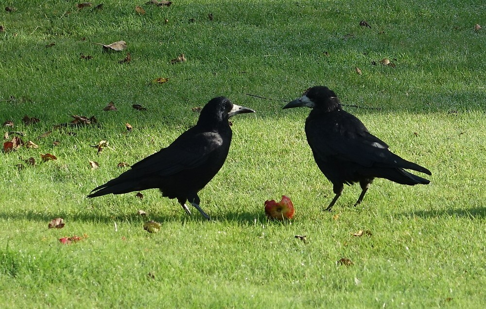 Rooks by frogs123