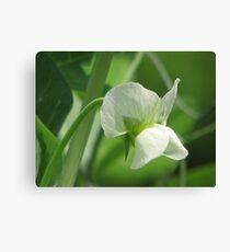 Pea Flower Canvas Print