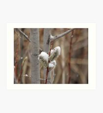 Snowy Willows Art Print