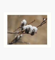 Snow on the Willows Art Print