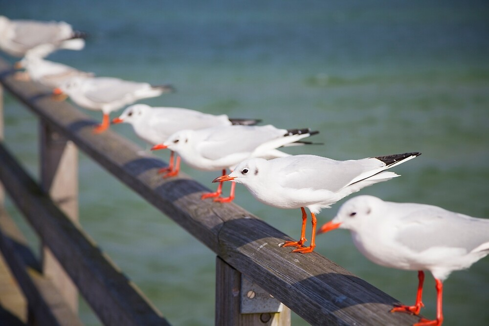 Seagulls by Maria Heyens