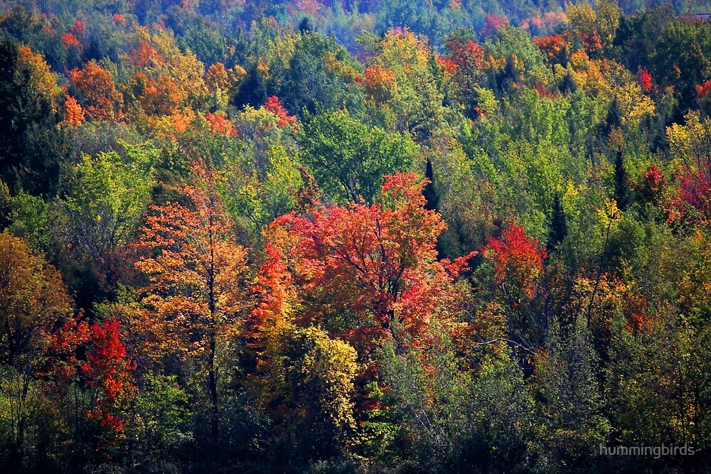 Fall in Franklin by hummingbirds