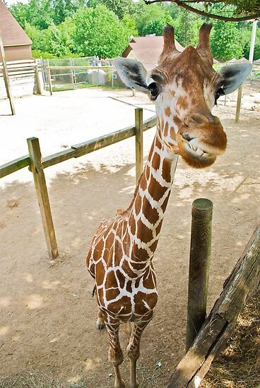 Who said giraffes can't smile? by Robert Coppock