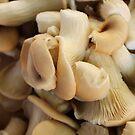 Fungii by Janie. D