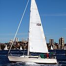 Sailing on Sydney Harbour by Michael John