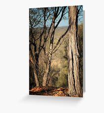 Beyond The Trees, Quilpie © Vicki Ferrari Photography Greeting Card
