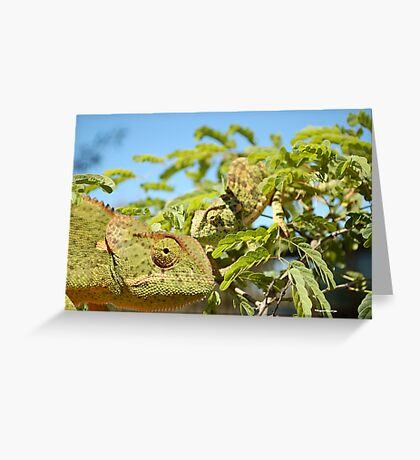 THE CAMELEON VISIT  Greeting Card