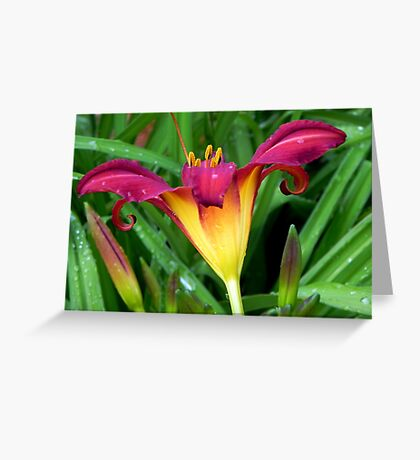A Pretty Lily!!! © Greeting Card