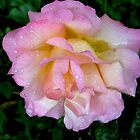 Rose After Rain by vadim19