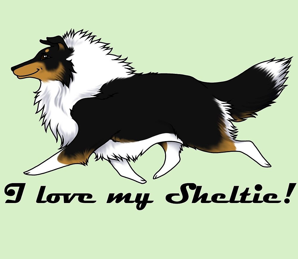 Love your tri-color Sheltie! by Kyle Lawrence