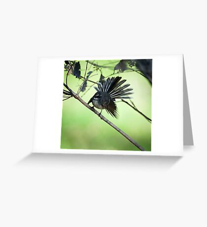 """""""All Fanned Out"""" Greeting Card"""