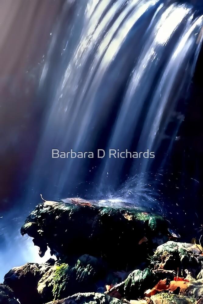 Fall Splash by Barbara D Richards