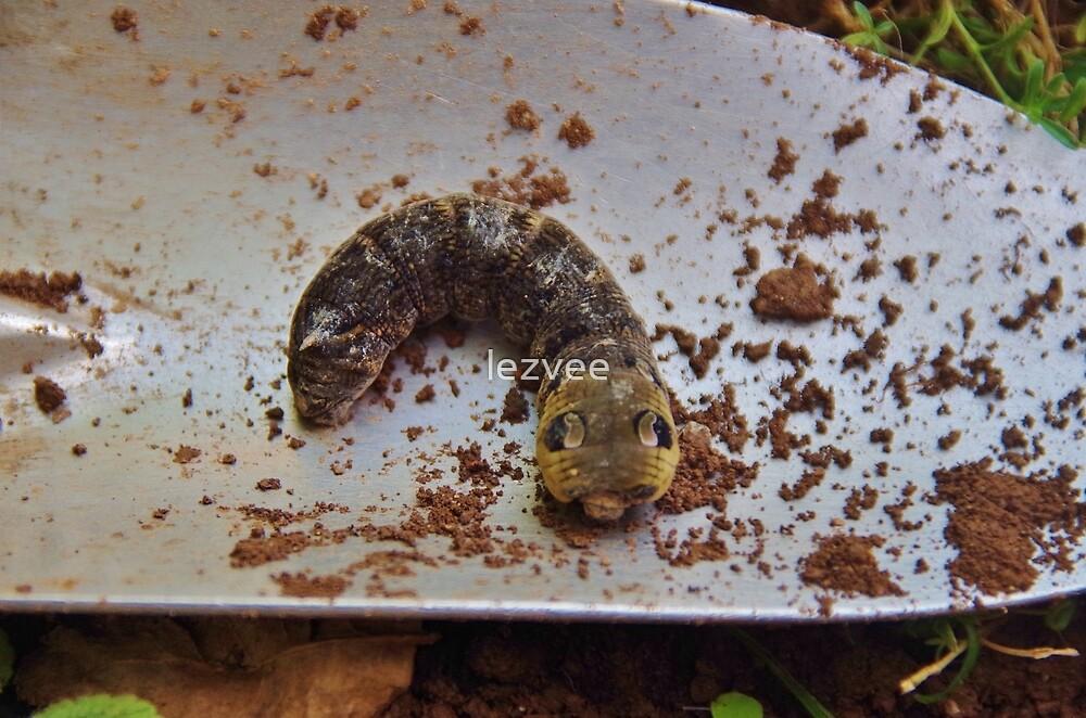 Big Eyes!  (Elephant Hawk-Moth Caterpillar) by lezvee
