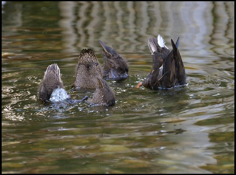 All Together Now Children...DIVE! by Carol Clifford