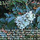 White as Snow by trisha22