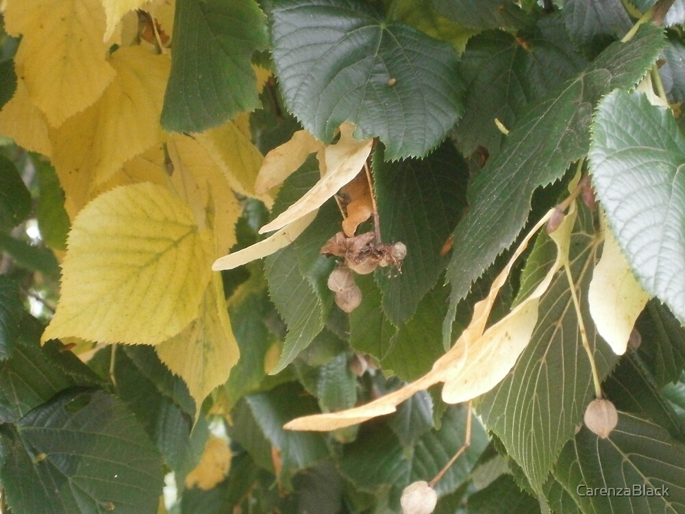 Autumn begins by CarenzaBlack