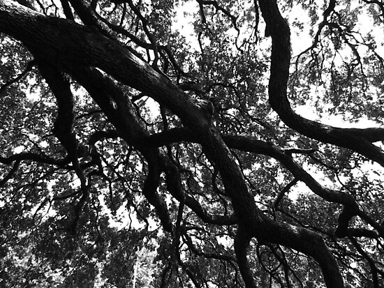 Houston Oak Branches by ashesofheroes