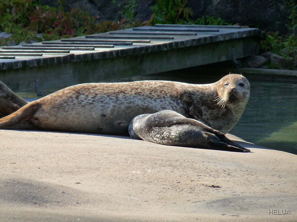 Mother Seal and Cub by HELUA