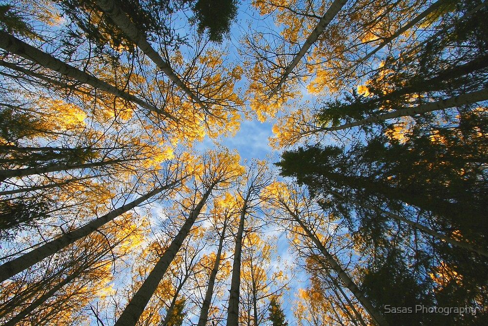 Colorful trees and sky by IB Photography