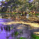 Flooded land #2 by Jennifer Craker