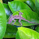 Juvenile Cuban Anole Lizard - Florida by glennc70000