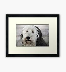 Shaggy Dog Framed Print