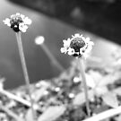 Miniscule Flowers - Lakes Edge by glennc70000