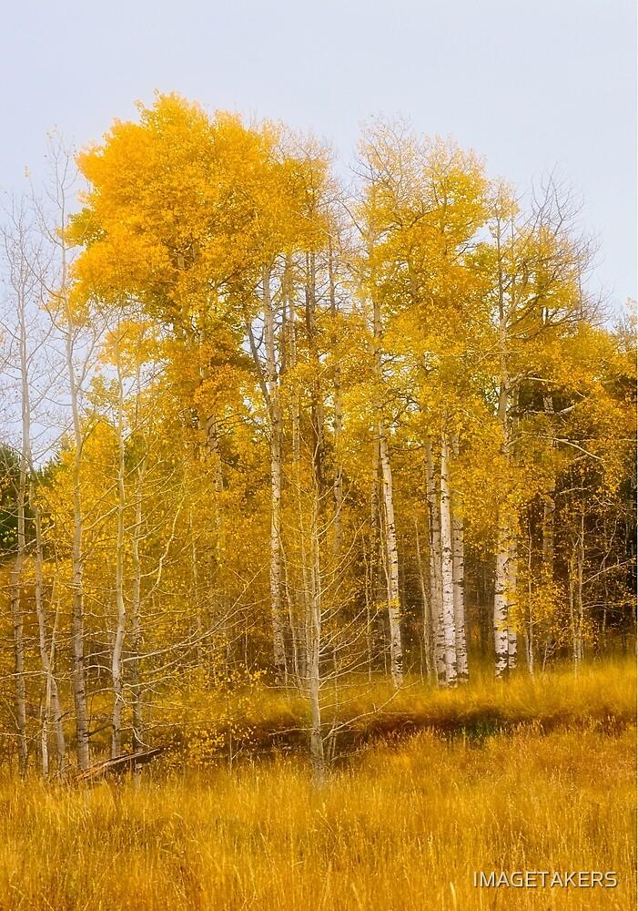 Ashton Idaho - Season Of Color (m) by IMAGETAKERS