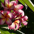 flower II - flor by Bernhard Matejka