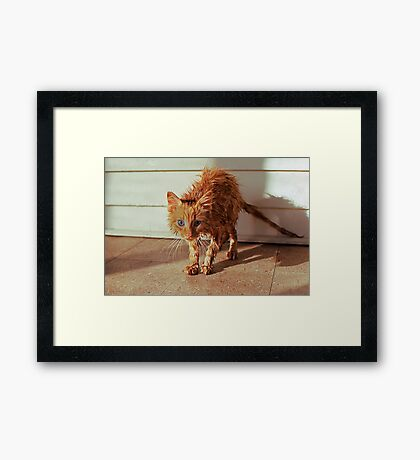 Wet Kitty Framed Print