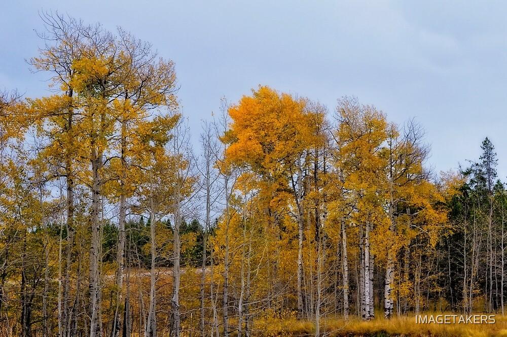 Ashton Idaho - Season Of Color (o) by IMAGETAKERS