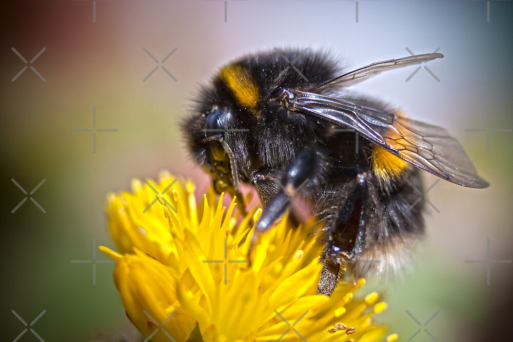 Busy Bee by Geoff Carpenter