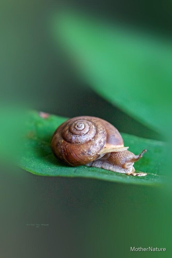 Woodland Snail on Sassafras Leaf by MotherNature