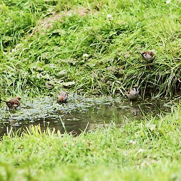 4 little tweety birds by xxnatbxx