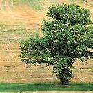 One Tree #2 by Bridges