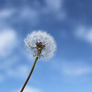 Wishful by Danika & Scott Bennett-McLeish