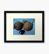 tailed Framed Print