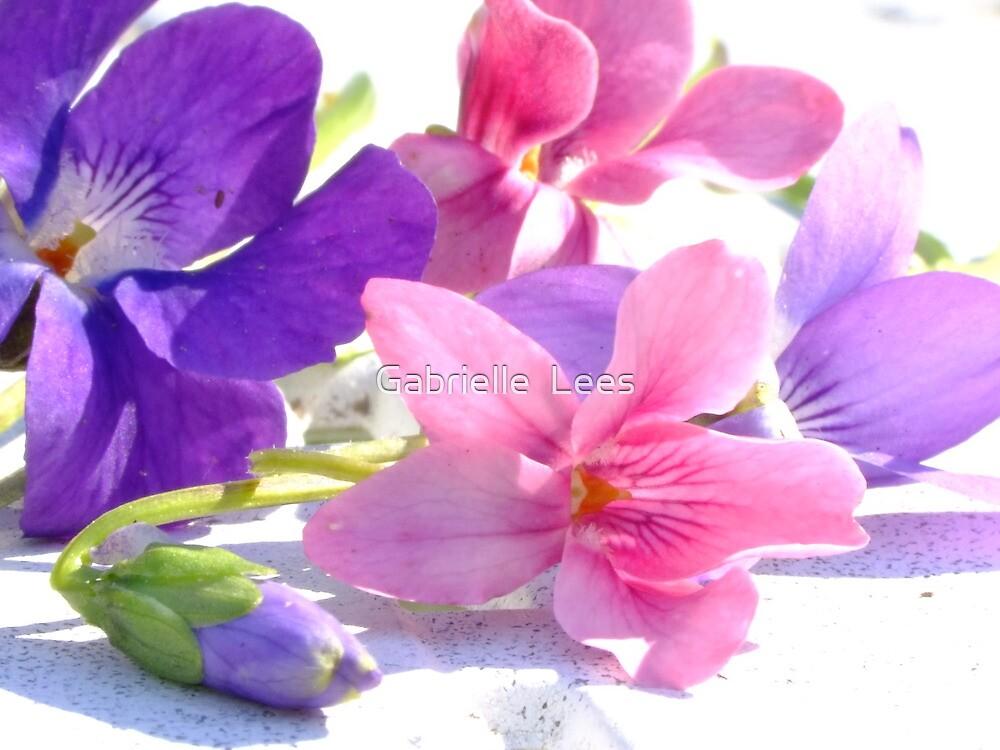 Sweet Violets by Gabrielle  Lees