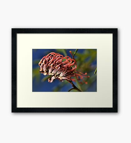 About to Stretch. Framed Print