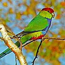 Beautiful Wild Parrot by Robert Abraham