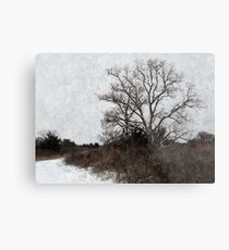 Chinaberry Tree Metal Print
