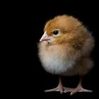 Chick by Houndstooth