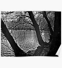 Weeping Trees Poster