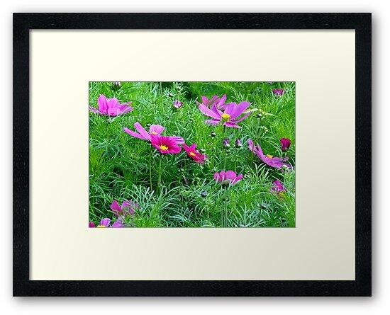 Flowery Meadow by Chris Goodwin