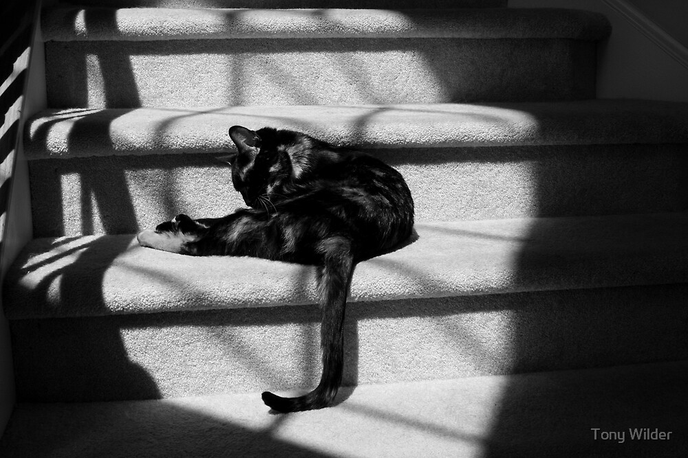 Paisley in Shadows by Tony Wilder