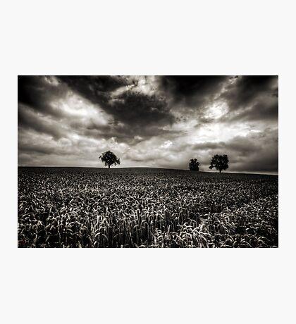 Weizen in der Schweiz Photographic Print