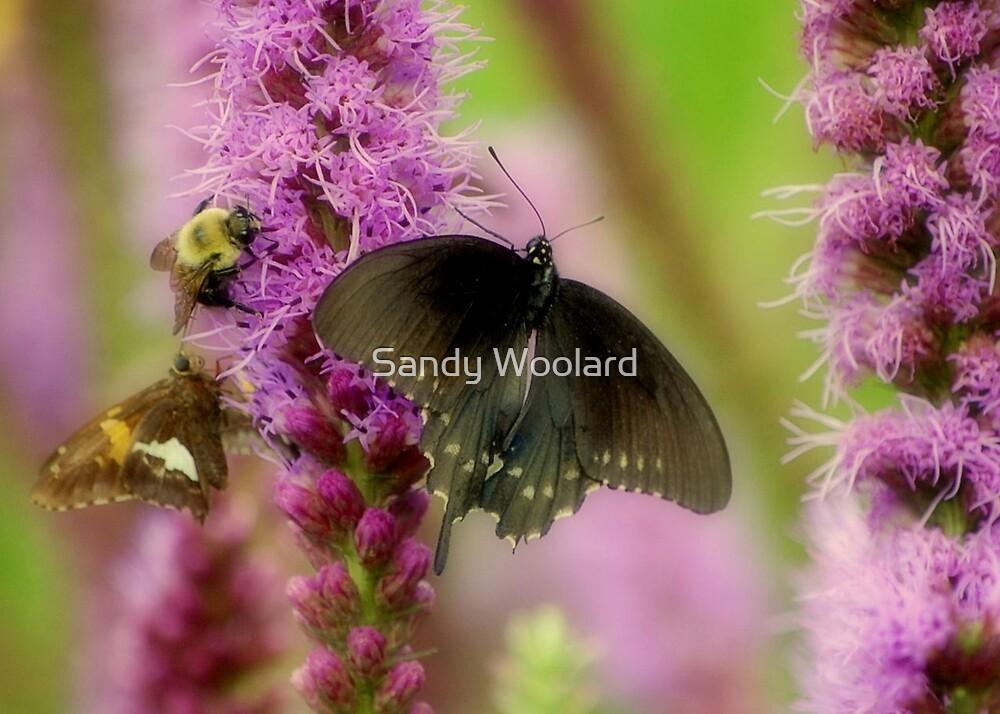 Mother Nature by Sandy Woolard