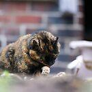 Cat Washing by shane22