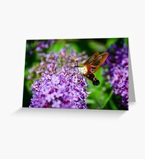 Hummingbird Clearwing on Butterfly Bush Greeting Card